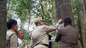 สำนักพระราชวังบวงสรวงตัดไม้จันทน์หอม 12 ต้น กลางป่ากุยบุรี นำไปจัดสร้างพระโกศทรงพระบรมศพ