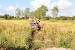 ชาวนาไม่ง้อโรงสีขอสีข้าวขายเองในหมู่บ้านได้ราคาสูงกว่า