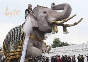 "Exclusive! ""ลาดทองแท้"" ควาญคชสารแห่งวังช้างอยุธยา"