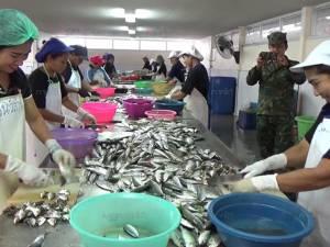 ทหารตรวจเข้มแพปลาใน อ.กันตัง จ.ตรัง แต่ไม่พบการทำผิด หวังอียูปลดล็อกใบเหลือง
