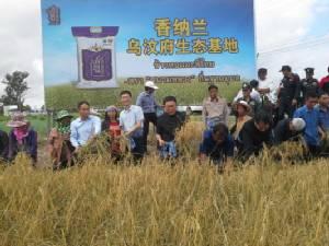 จังหวัดอุบลฯ ผนึกเอกชนส่งข้าวหอมมะลิไปตลาดจีนโดยตรง 3 หมื่นตัน