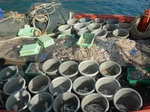 นักวิชาการติงรัฐแก้ปัญหาใบเหลืองอียูไม่ตรงจุด เตือนประมงพาณิชย์หยุดเห็นแก่ได้ ฟื้นทะเลไทยจากวิกฤต