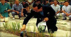 ปลูกหญ้าแฝก 300 ล้านกล้า แก้ปัญหาดินเสื่อมโทรม