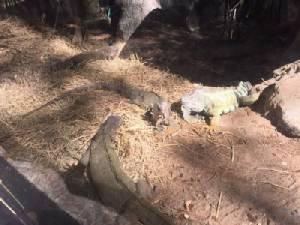 เชียงใหม่ไนท์ซาฟารีหวั่นหนาวกระทบสุขภาพสัตว์ เร่งเสริมมาตรการเพิ่มความอบอุ่น