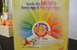 """ออกแบบ """"ไข่"""" ให้ได้ดั่งใจ"""