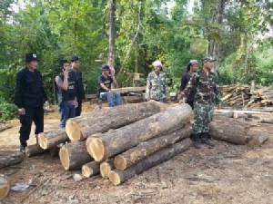 หนีกันป่าราบ! มอดไม้ลำปางเหิม-ลอบตัดสักกลางสวนป่า อ.อ.ป.กองพะเนิน