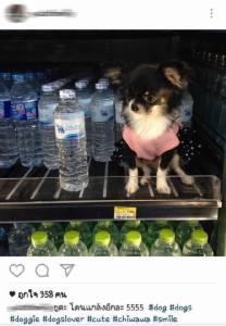 """รักหมาจนขาดสติ! พา """"ชิวาวา"""" สัมผัสถังน้ำแข็ง-เครื่องดื่มเซเว่นฯ ฟ้องห้าง ไล่ รปภ.ห้ามนำสัตว์เลี้ยงเข้า"""
