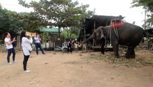เจ้าของช้างในราชบุรีโร่ร้องศูนย์ดำรงธรรมฯ ถูก จนท.กรมอุทยานฯ ยึดช้างไป ยันมีตั๋วรูปพรรณถูกต้อง (ชมคลิป)