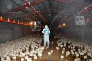 S. Korea issues top bird flu alert