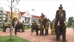 คนช้างยื่นขอความเป็นธรรม ชุดพญาเสือยึดช้างจากวังช้างแลเพนียดอยุธยา อ้างปลอมตั๋วรูปพรรณ