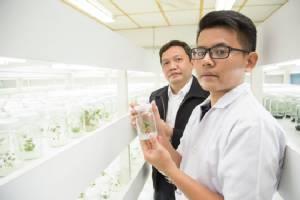 ก้าวใหม่ของนักวิจัยไทย ปรับปรุงพันธุ์สตรอว์เบอร์รี่เป็นยา