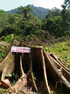 แฉ! ป่าภาคใต้วิกฤตถูกลักลอบตัดนับแสนไร่ จวกเจ้าหน้าที่รัฐเอี่ยวผลประโยชน์