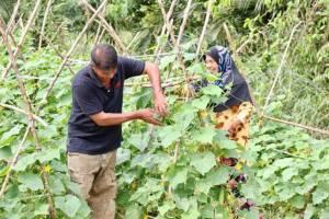 เกษตรกรพังงารวมกลุ่มยึดหลักเศรษฐกิจพอเพียง ปลูกผักสร้างรายได้เสริม
