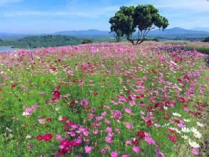 ภาคตะวันออกก็มี ที่เช็คอิน จุดชมดอกไม้งามบานสะพรั่ง