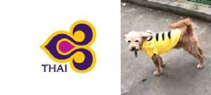 การบินไทยแจงกรณีน้องหมาหลุดกรงก่อนถูกเจ้าหน้าที่สนามบินยิงตาย!