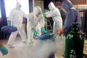 Japan culling 90,000 more birds for avian flu