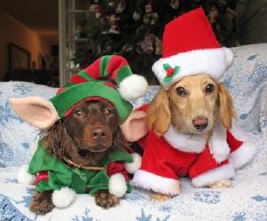 """""""คอสตูมปาร์ตี้ปีใหม่น้องหมา"""" แฟชั่นนิสต้าชิดซ้าย"""