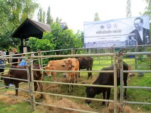 สำนักงานปศุสัตว์จังหวัดสตูลจัดพิธีไถ่ชีวิตโค-กระบือ เพื่อเกษตรกรตามพระราชดำริ
