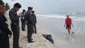 พบโลมาหัวบาตรตายเกยตื้นหาดหัวหิน คาดถูกใบพัดเรือ
