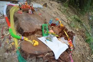 """สุดเศร้า! """"ชาวยางโทน"""" กาญจนบุรีแจ้ง จนท.ล่ามอดไม้ลอบตัดต้นตะเคียนทองยักษ์ อายุกว่า 300 ปี"""
