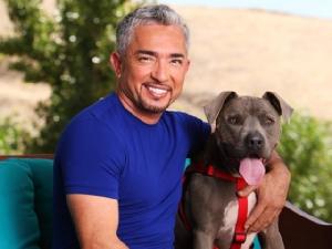 """ผู้ฝึกสุนัขระดับโลก """"ซีซาร์ มิลลาน"""" น้อมรำลึกในหลวง ร.๙ ทรงช่วยสุนัขจรจัดในไทย"""