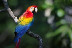 """""""ราชินีแห่งนก"""" ส่อง 7 นกสวยที่สุดในโลก"""