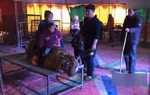 คลิปอึ้ง! คณะละครสัตว์จีนมัดเสือติดโต๊ะให้นักท่องเที่ยวขึ้นขี่หลัง ชาวเน็ตรุมด่ายับ