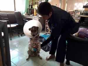 แจ้งข้อหาเจ้าของพิตบูลละเลยปล่อยสุนัขกัดหมาเพื่อนบ้านเป็นทรัพย์เสียหาย โทษจำคุก 1 เดือน ปรับ 1 หมื่น ค่ารักษาฟ้องแพ่ง