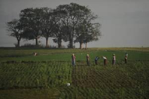 เจ้าหน้าที่เขตมัณฑะเลย์วางแผนยึดที่ดินรกร้างนับแสนไร่มาทำประโยชน์