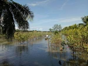 ชาวสวนผลไม้ที่สุราษฎร์ฯ ร้องเดือดร้อนหนักน้ำท่วมทำผลไม้ยืนต้นตาย