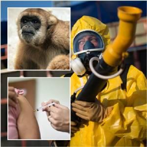 InClip : บราซิลเตือนภัยสูงสุด โรคไข้เหลืองระบาดชุมชนเมือง คร่าชีวิตนับสิบ สุดอึ้ง! ฝูงลิงป่าสายพันธุ์สุดหายากของโลกเสี่ยงสูญพันธุ์