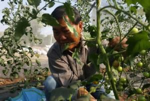 โกยปีละหลายล้าน! นักการเมืองดังบุรีรัมย์ผันชีวิต ปลูกเมลอน-แตงโม-มะเขือเทศในโรงเรือนขาย