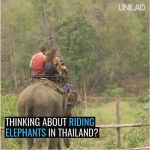 """""""พรากลูกพรากแม่ - ให้แบกของหนัก – เอาตะขอสับ"""" ฝรั่งประจาน """"ทัวร์ขี่ช้างไทย"""" ต้องขอ Say No!!"""