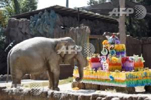 Trompita turns 56