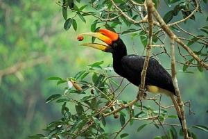 ศักยภาพนกเงือกผู้ปลูกป่า  ยันข้อมูลวิจัย ชวนคนไทยรักป่า ผ่านนกเงือก