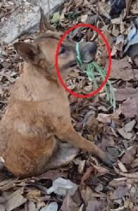 จิตใจทำด้วยอะไร?  มนุษย์ใจโหด มัดปากสุนัขพิการด้วยเชือก น่าสงสารมาก
