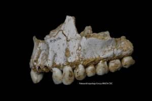 """มนุษย์ดึกดำบรรพ์ """"นีแอนเดอร์ทัล"""" รู้จักใช้แอสไพรินมาเกือบ 50,000 ปี"""
