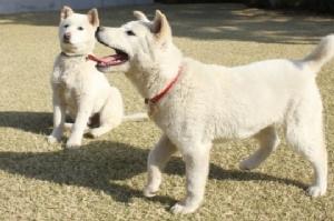 """องค์กรพิทักษ์สัตว์โสมขาวโวย """"พัค กึน-ฮเย"""" ทอดทิ้งสุนัข 9 ตัวไว้ในทำเนียบ!!"""