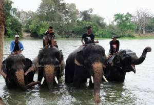 """เคป & แคนทารี โฮเทลส์ ชวนเที่ยวอยุธยาตามรอยช้างไทย พักสบายที่ """"คลาสสิค คามิโอ"""""""