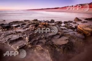 Unparalleled' number of dinosaur tracks found in Australia