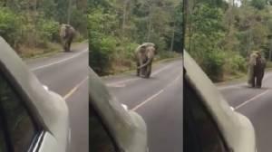 """""""มันจะเลวกว่ากูได้ไงวะ"""" ช้างเขาใหญ่รับสู้ไม่ได้"""