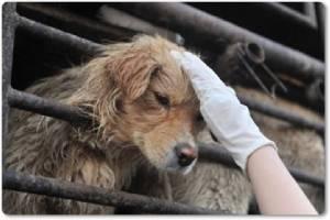 """InClip: ประเทศแรกในเอเชีย """"ไต้หวัน"""" ออก """"กม.ห้ามกินเนื้อสุนัข"""" อย่างเป็นทางการแล้ว โทษปรับสูงถึง 2 ล้านดอลลาร์ไต้หวันใหม่"""