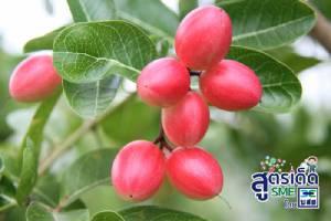 'K Health' น้ำมะม่วงหาวมะนาวโห่ ดื่มได้สุขภาพ  ติดปีกพืชริมรั้วทำเงิน