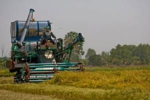 """""""เกษตรแปลงใหญ่"""" ความท้าทายของการจัดการ"""
