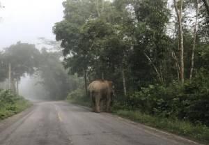 ระทึก! ผัวเมียขับรถบรรทุกกล้วยหลบช้างป่าละอู พลิกคว่ำตกข้างทาง บาดเจ็บทั้งคู่