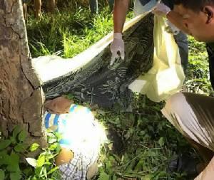 โขลงช้างป่าอ่างฤาไนนับร้อย บุกสวนยางเหยียบชาวบ้านดับ 1