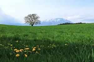 """ญี่ปุ่นมุมใหม่...""""อิวาเตะ"""" เมืองชนบทแสนงาม น้ำใส เขาสวย รวยธรรมชาติ/ปิ่น บุตรี"""