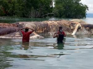 กูรูออนไลน์เงิบ! ทางการรู้แล้วสัตว์ประหลาดยักษ์เกยตื้นฝั่งอินโดฯ เป็นตัวอะไร