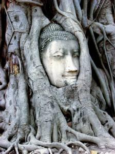 เศียรพระพุทธรูปในรากต้นโพธิ์ Unseen Thailand ดังไกลไปทั่วโลก