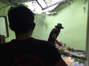 โครมสนั่น..ฝนหนัก-ต้นก่อยักษ์ล้มฟาดบ้านบนดอยสุเทพ พัง 3 หลัง ชาวบ้านรอดหวุดหวิด